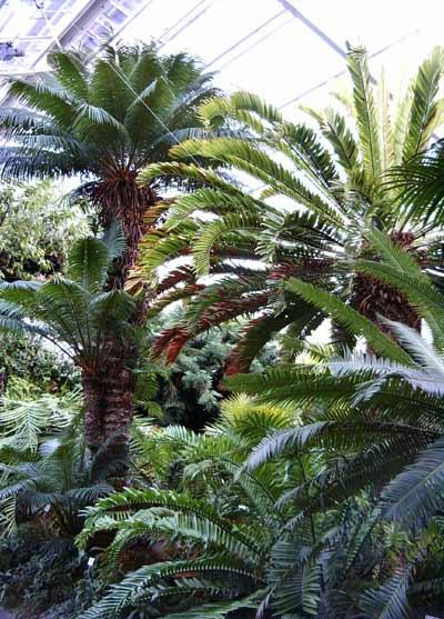 Willkommen auf pflanzenliebe.de im Botanischen Garten!